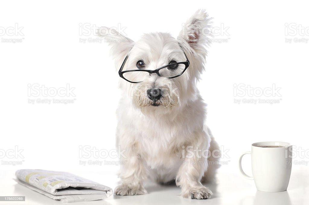Porta occhiali a forma di West Highland Terrier