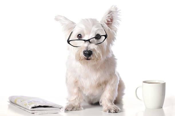 Porta occhiali a forma di West Highland Terrier KZYtJ