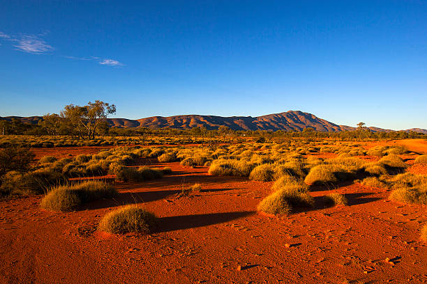 west macdonnell ranges, northern territory, australia - bush stockfoto's en -beelden