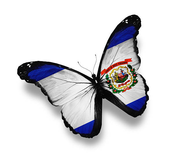 West Virginia flag butterfly, isolated on white West Virginia flag butterfly, isolated on white west virginia us state stock pictures, royalty-free photos & images