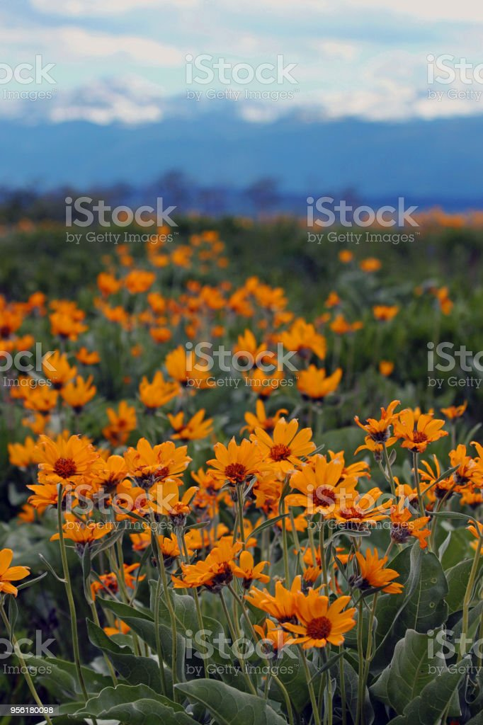 West Yellowstone Springtime stock photo