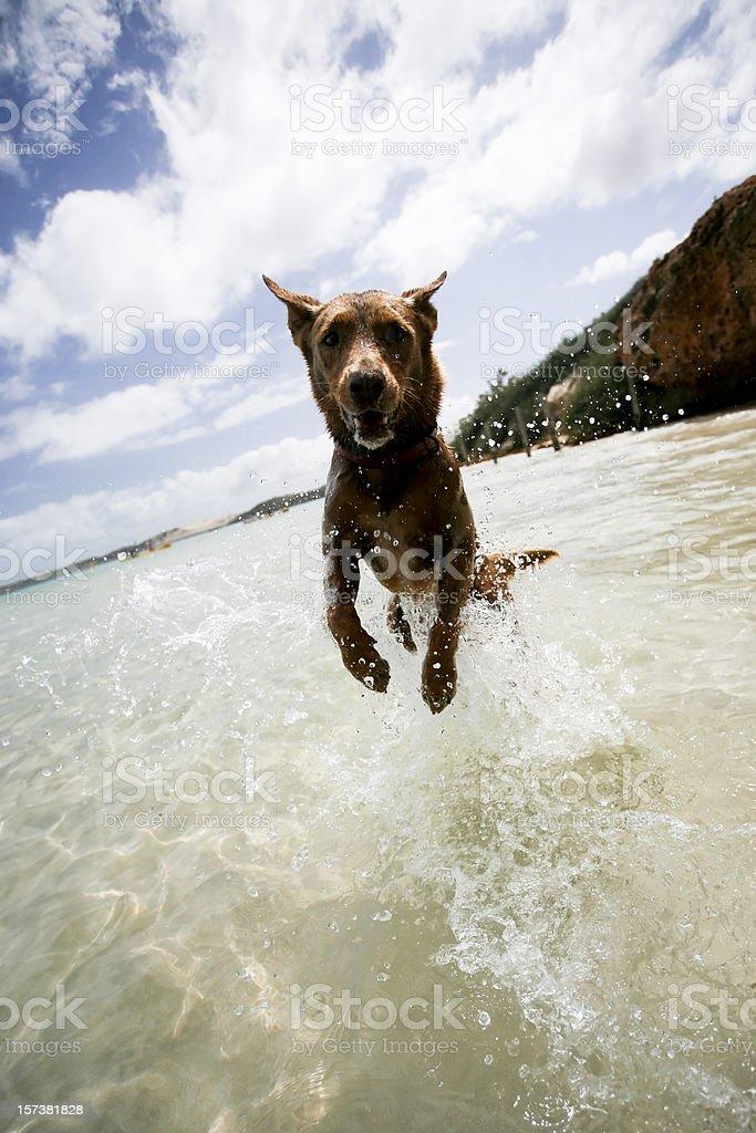 Western Australia - jumping dog stock photo