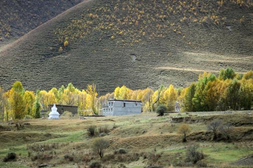 Western China, autumn trees xinduqiaoWestern China, autumn trees xinduqiao
