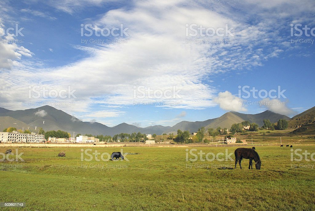 Western China, Highlands Ranch royalty-free stock photo