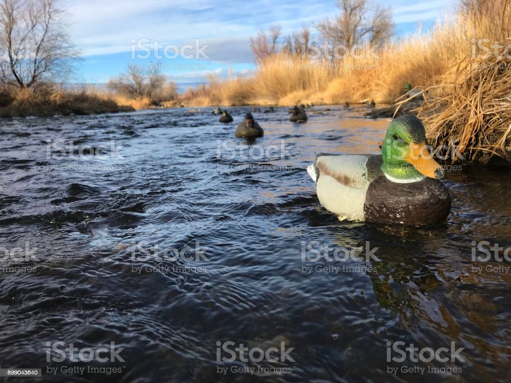 Western Colorado winter outdoor sports duck hunting stock photo