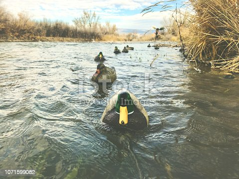 Morning waterfowl Mallard Hunt Western Colorado winter outdoor sports duck hunting Decoys waterfowl shot during hunt at various angles with copy space and varied depth of field - shot with iPhone 7 Plus