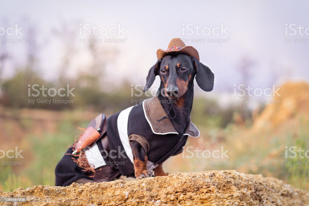 Western Cowboy Sheriff Dachshund Dog
