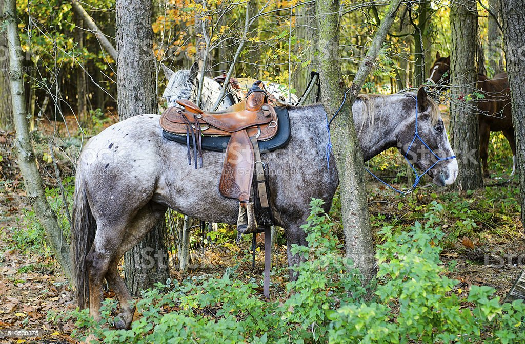 Western horse stock photo