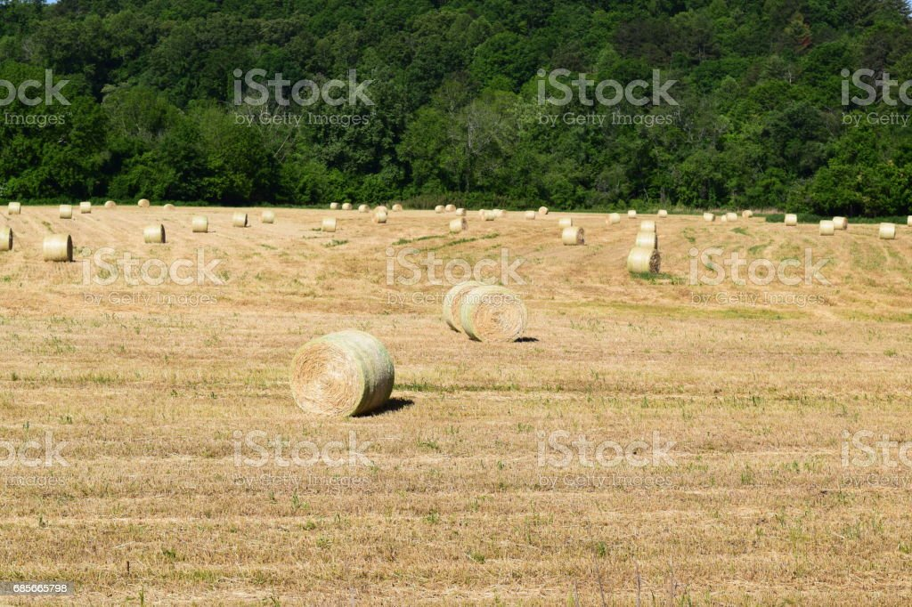 Western NC farm field with rolled hay stock photo