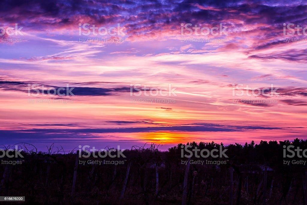 Western New York State Vineyard Sunset stock photo