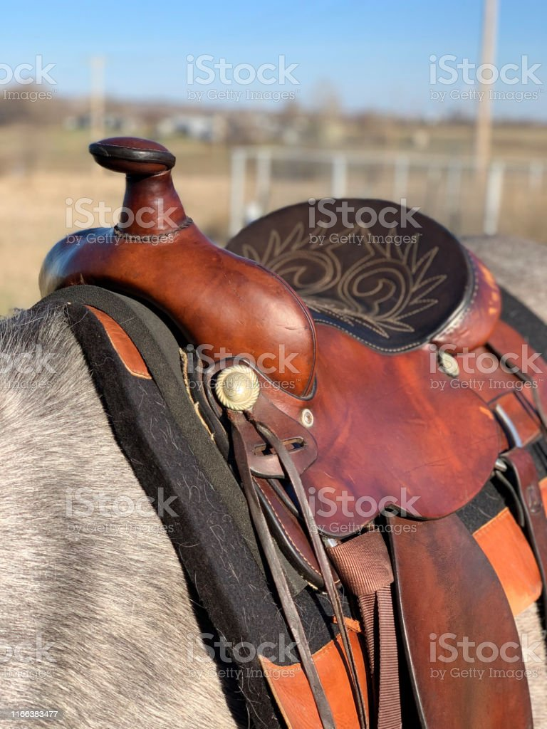 Western Trail Riding Saddle Stock Photo Download Image Now Istock