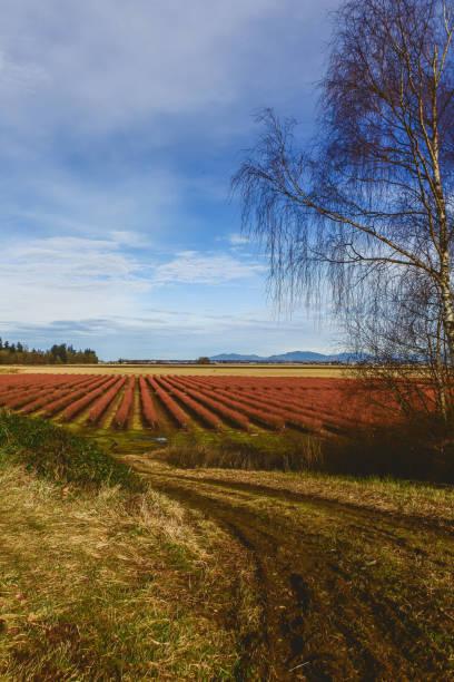 Westliche Washington Ackerland – Foto