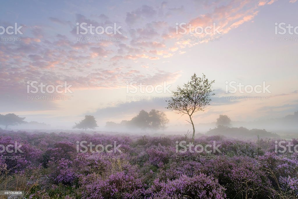 Westleton Heath stock photo