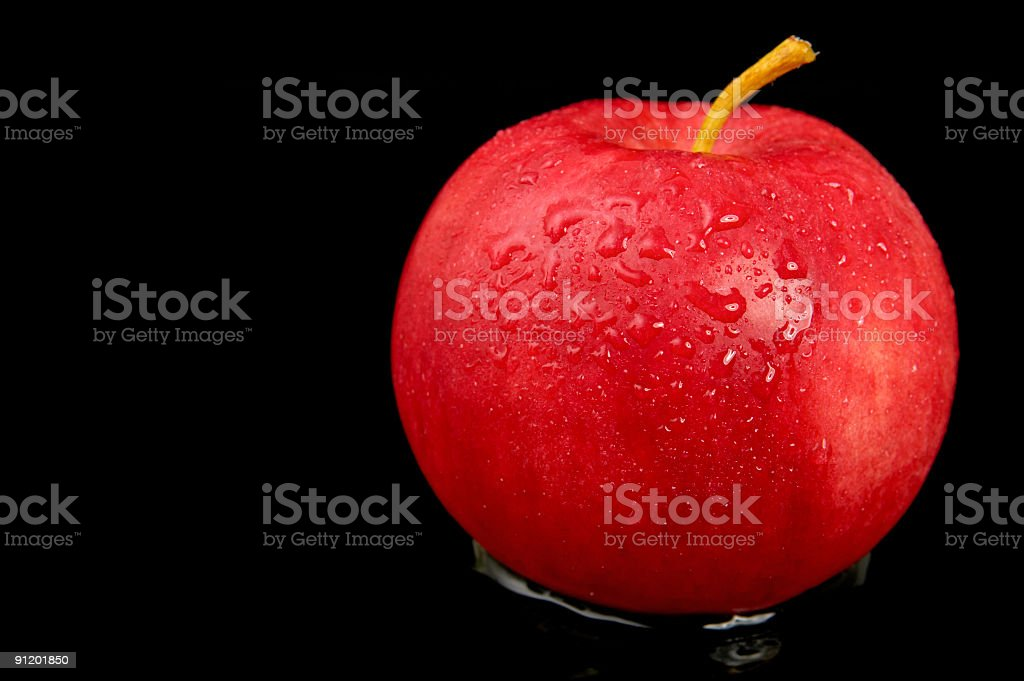Wet and Red royalty-free stock photo