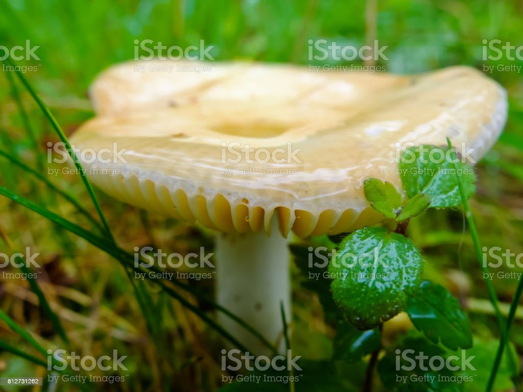 Wet and slippery mushroom growing stock photo