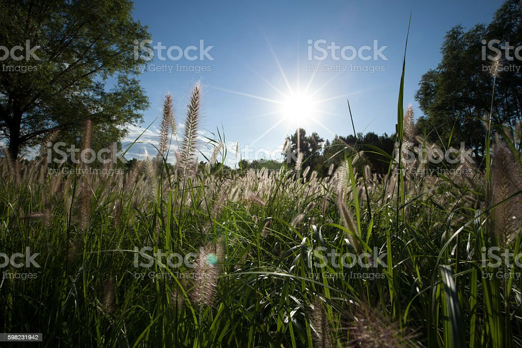 Wet Area in Olympic Forest Park in Beijing, China foto royalty-free