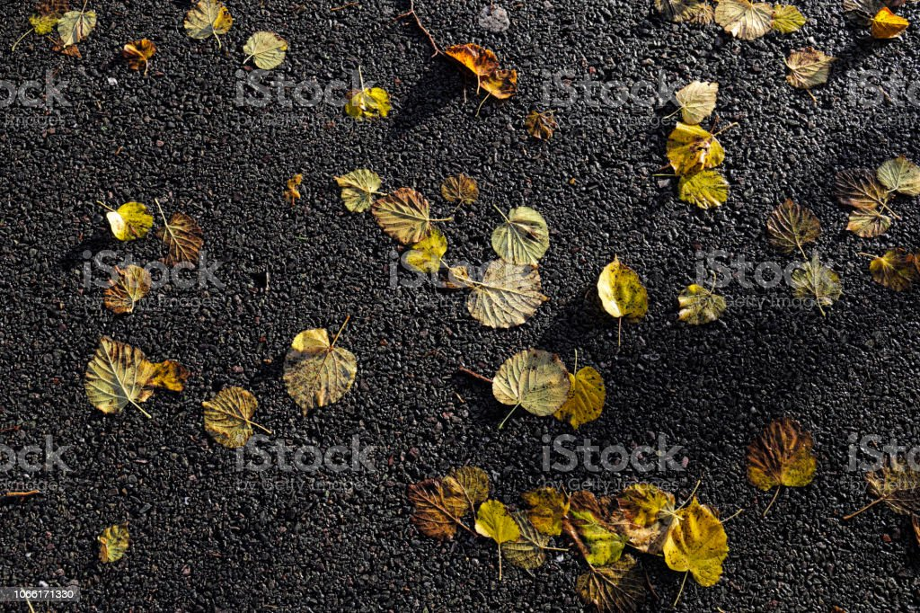 Wet autumn leaves on tarmacadam small leaved lime stock photo