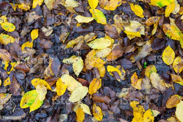 Photo of Wet Autumn Leaves on the Ground