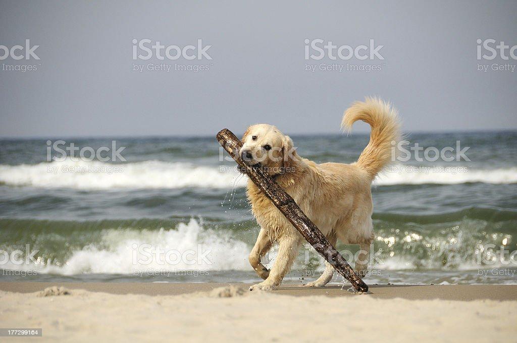 Wet Big Stick stock photo