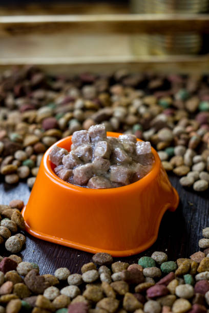 Wet canned pet food in a bowl surrounded by dry food. stock photo