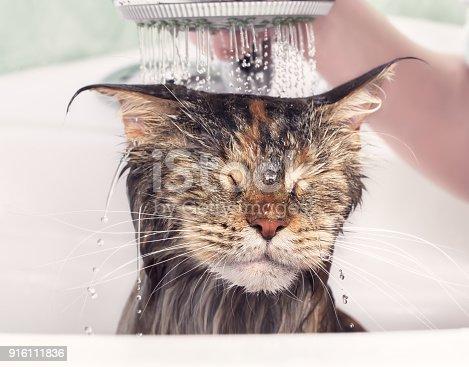 istock Wet cat in bath 916111836