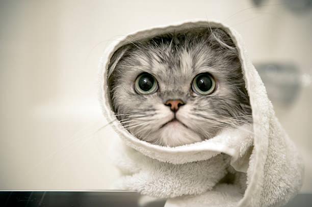 Wet Cat – Foto