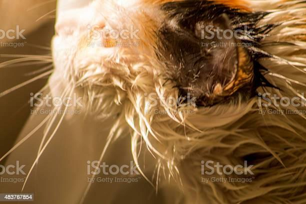 Wet cat picture id483767854?b=1&k=6&m=483767854&s=612x612&h=epfteud4zkajlk5lyw4hvyv7av xhr9bo0elol1wyy0=