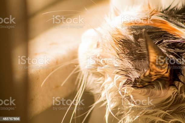 Wet cat picture id483767856?b=1&k=6&m=483767856&s=612x612&h=l4abe5gbtkdn4sfupi chf6e1vmedonqmuogj1tuqeo=