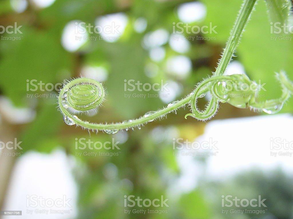 wet entspannen Sie auf einem Kürbis Pflanze Lizenzfreies stock-foto