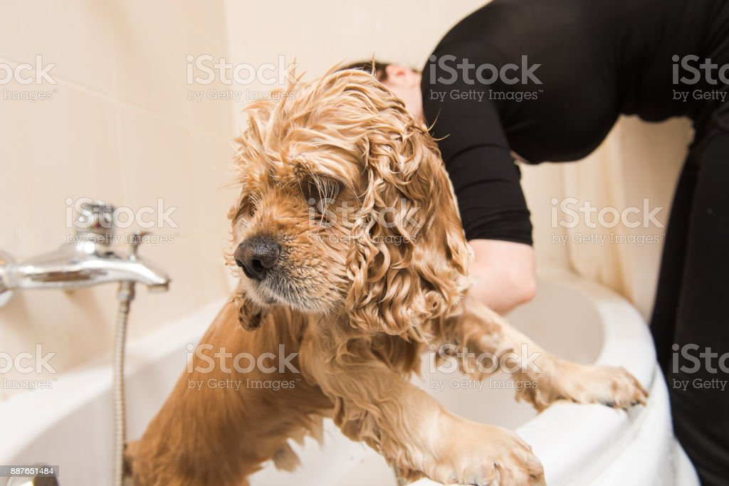Wet dog in the bathroom stock photo