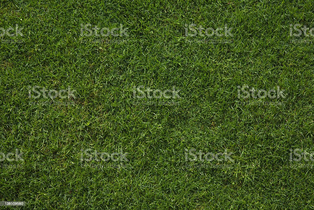 Wet French Grass beautiful background royalty-free stock photo