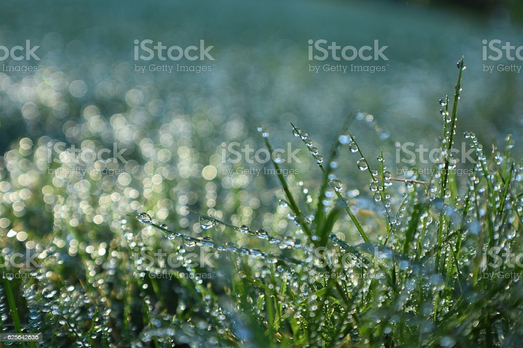 Wet Grass Bokeh stock photo