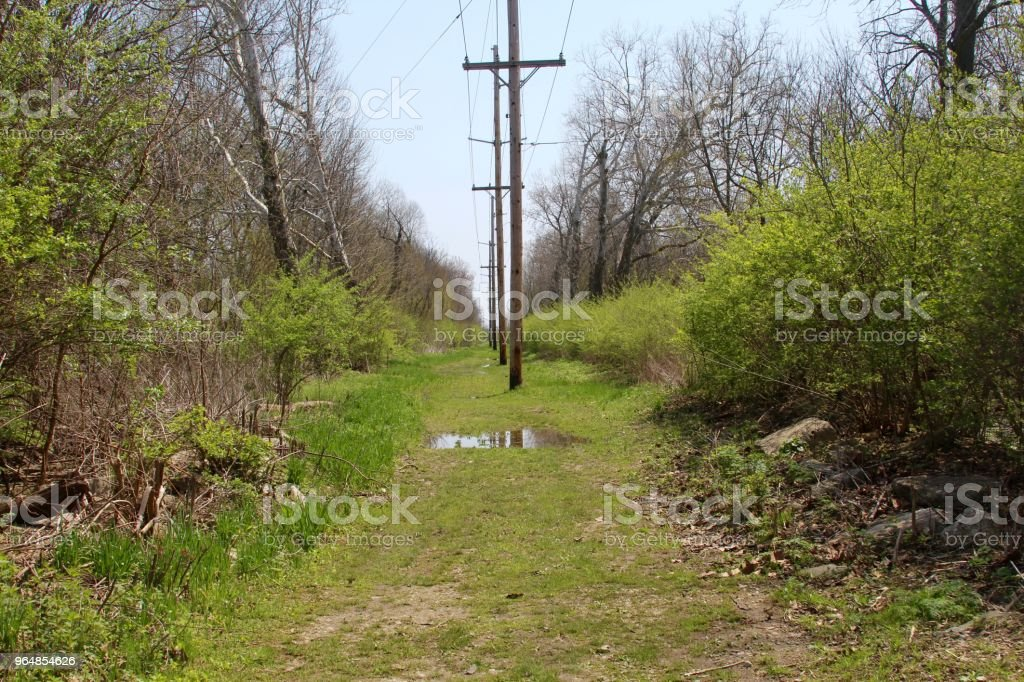 Wet Grass Path royalty-free stock photo