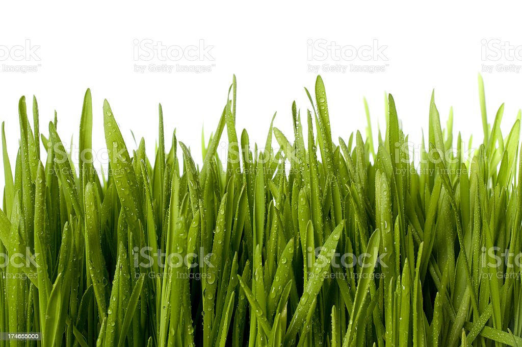 Wet Grass royalty-free stock photo