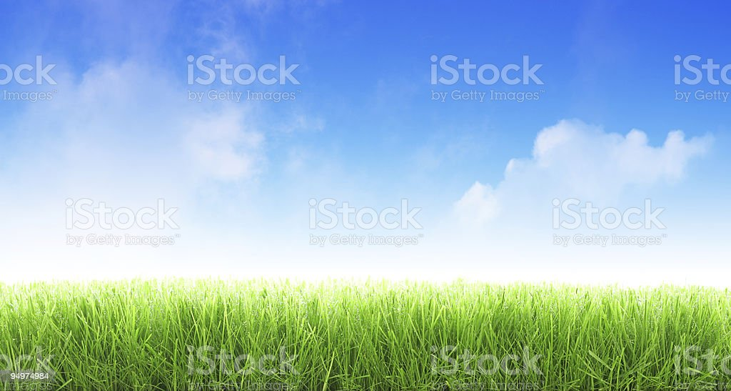 Wet grass with blue sky royalty-free stock photo