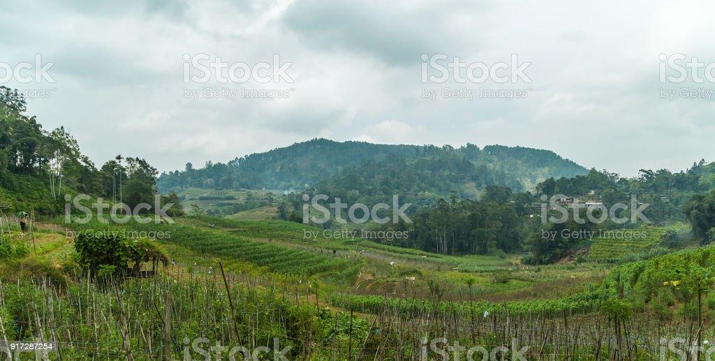 Wet grasslands & Sub-Montane and Montane forest Horton Plains National Park (Ohiya, Sri Lanka) stock photo