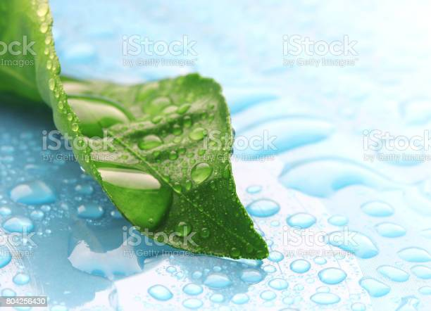 Photo of Wet green leaf in drops of water on blue surface