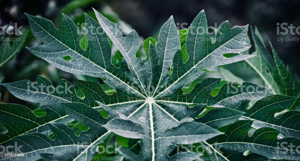 Wet Green Leaves Unique Photo Stock Photo Download Image Now Istock