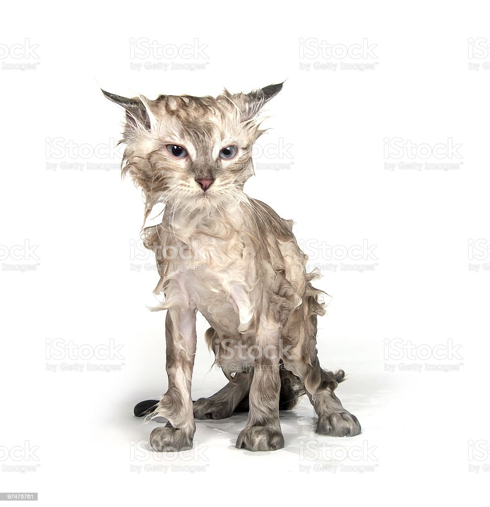 Wet kitten stock photo