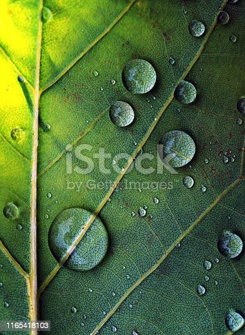 Taking a close look at a wet leaf.
