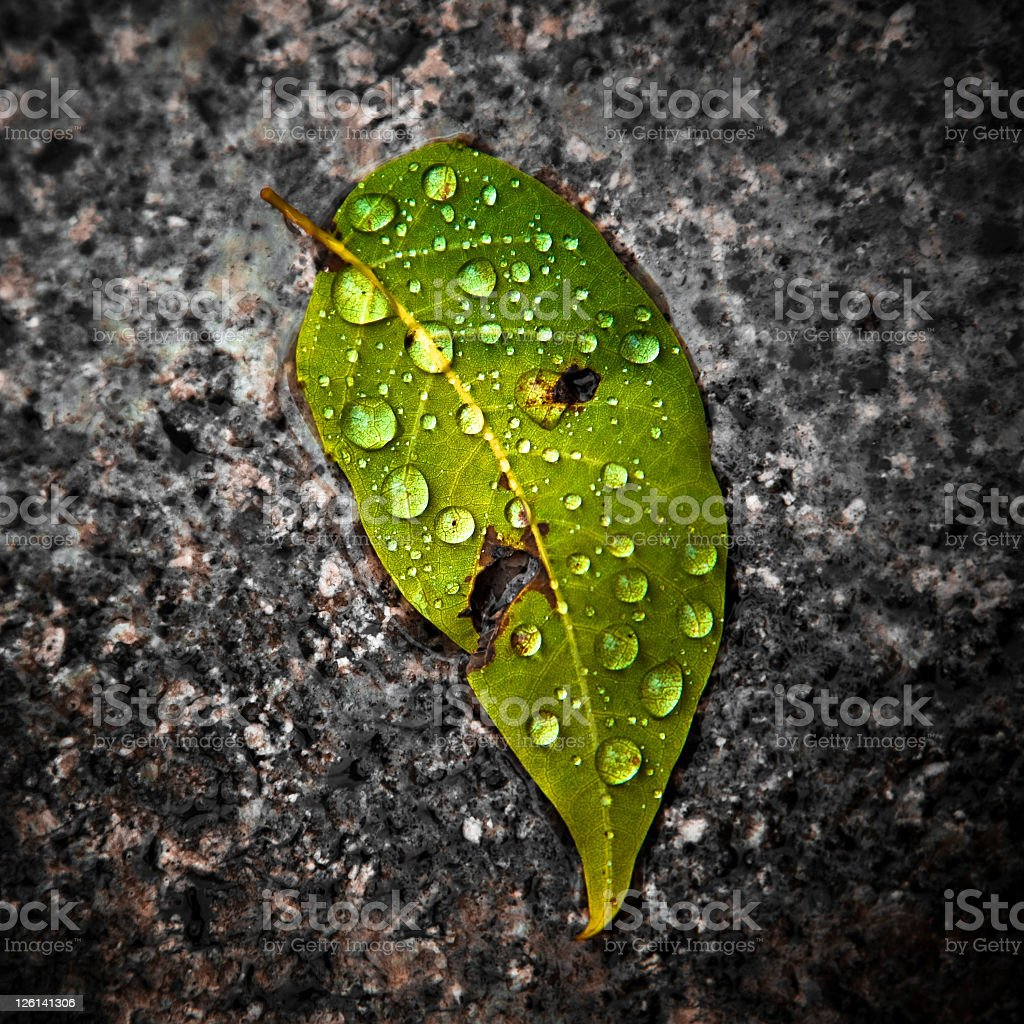 Wet leaf royalty-free stock photo