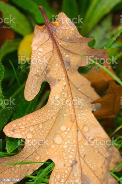 Photo of Wet leaf