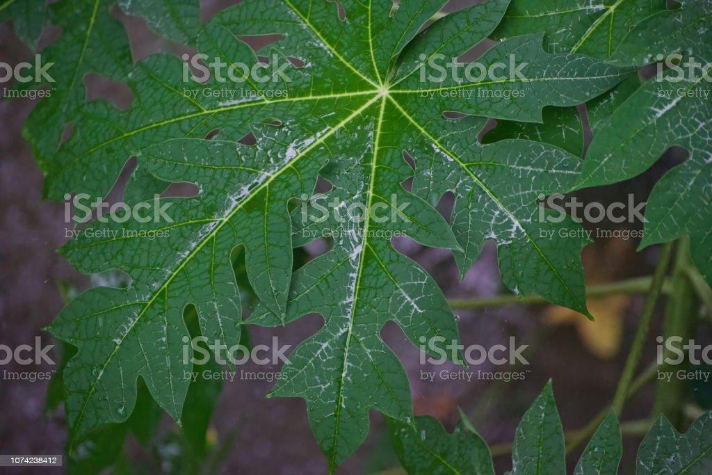 Wet leaves of a plant unique photo stock photo