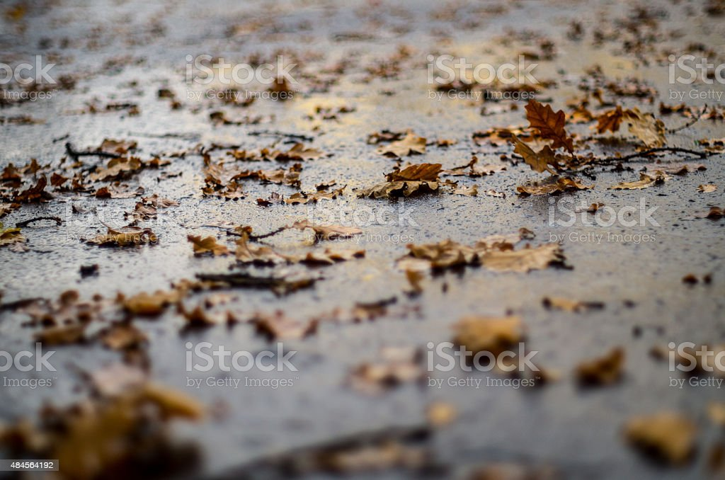 Wet leaves on tarmac. stock photo