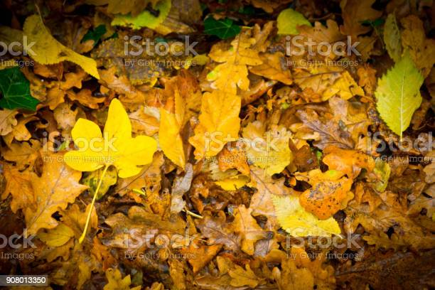 Photo of Wet leaves