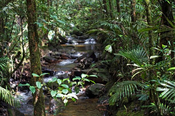 nasser Bergwald des Nationalparks Kinabalu – Foto