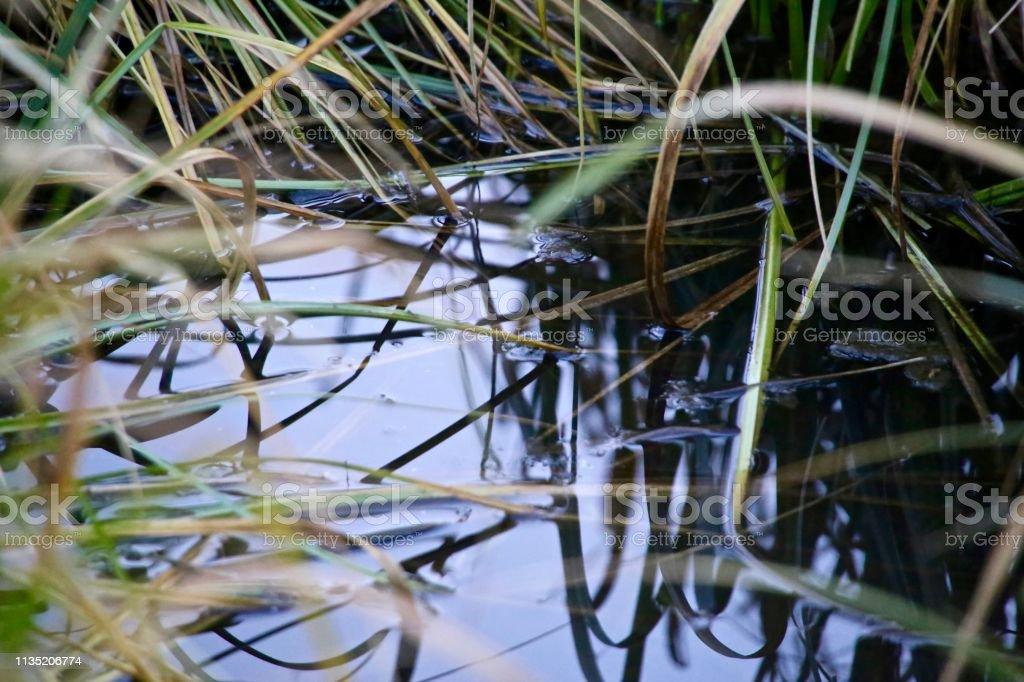 Wet stock photo