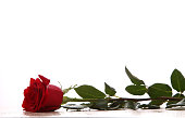 Three red rose stems on white background.