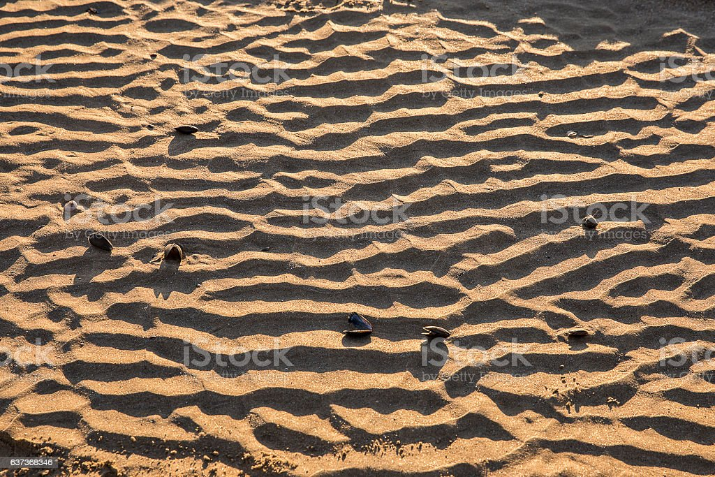wet sand with mussel shells and wavy pattern stock photo