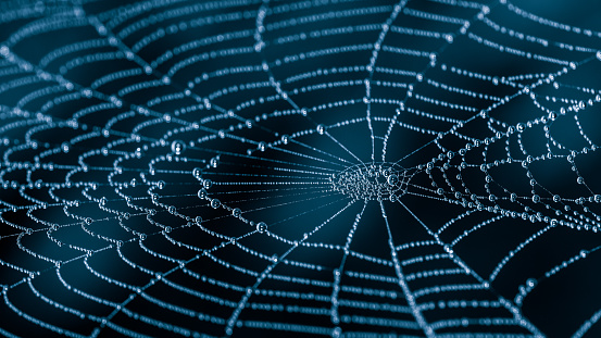 Wet spiderweb with beads of dew droplets close-up